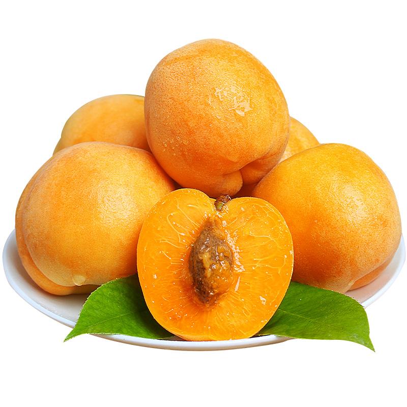 現摘杏子5斤新鮮金太陽大黃杏酸甜應季時令水果批發李子貴妃杏