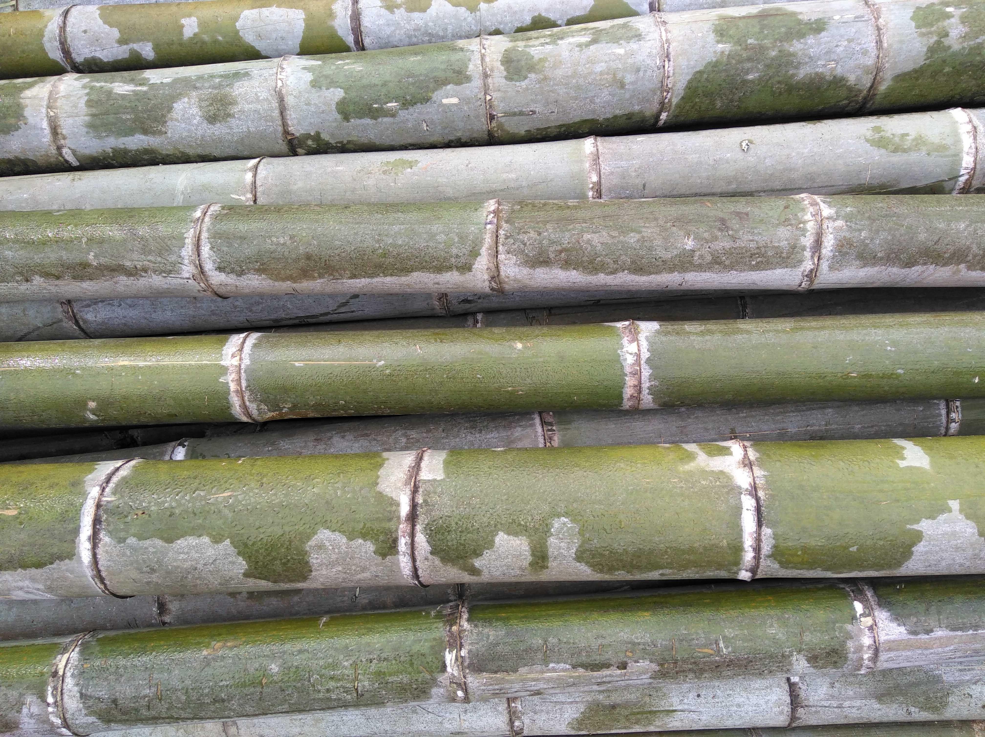 Бамбук новый чаша первобытный государственный натуральные зеленый бамбук трубка оригинал материал бамбук трубка рис