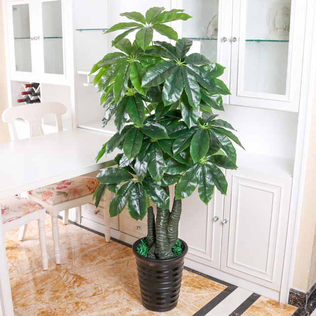Plants Potted Tree