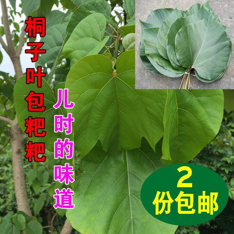 油桐叶粑粑重庆新鲜叶现摘新鲜桐树叶野生桐子桐子树叶树叶100张