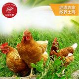 汇品土鸡农家散养老母鸡2.5斤券后39.9元包邮0点开始