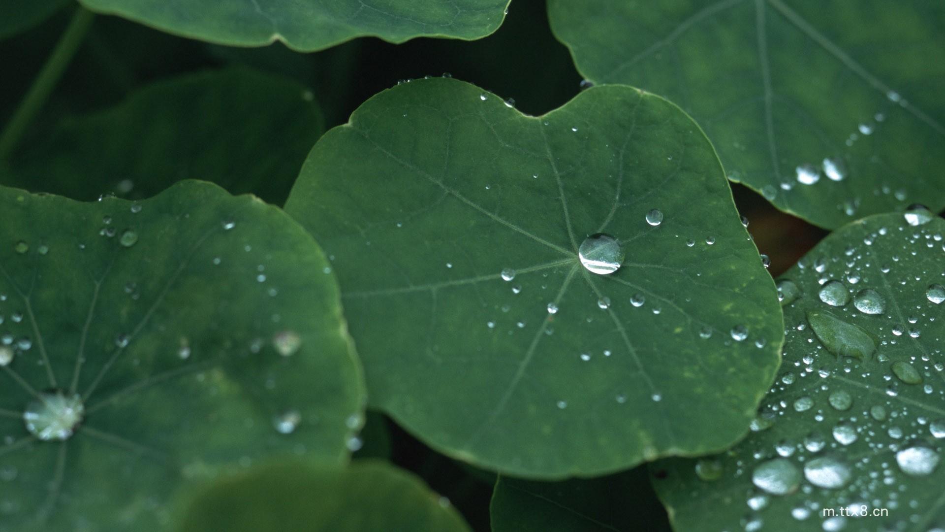 绿色植物叶子水珠高清图片素材