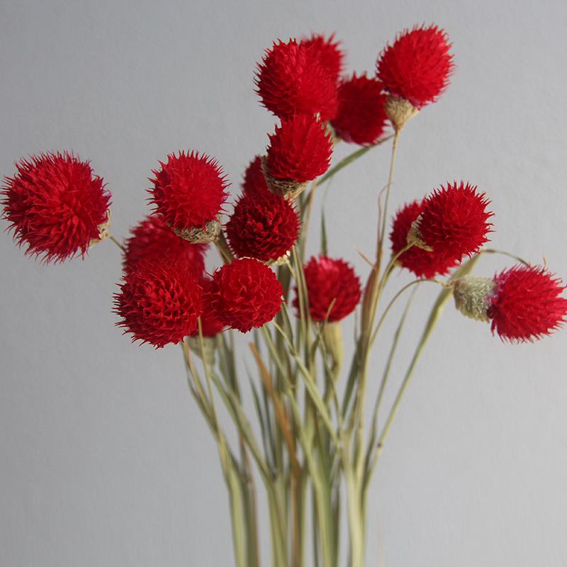 手工干花天然富贵招果才千日红草莓花果DIY素材插花装饰拍摄道具