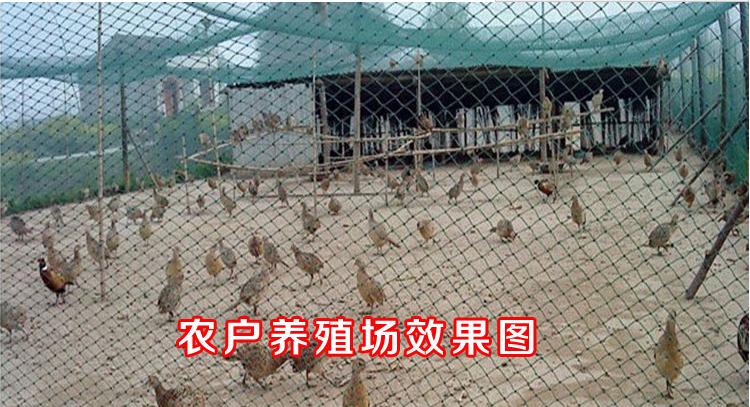 龙岩尼龙养殖网