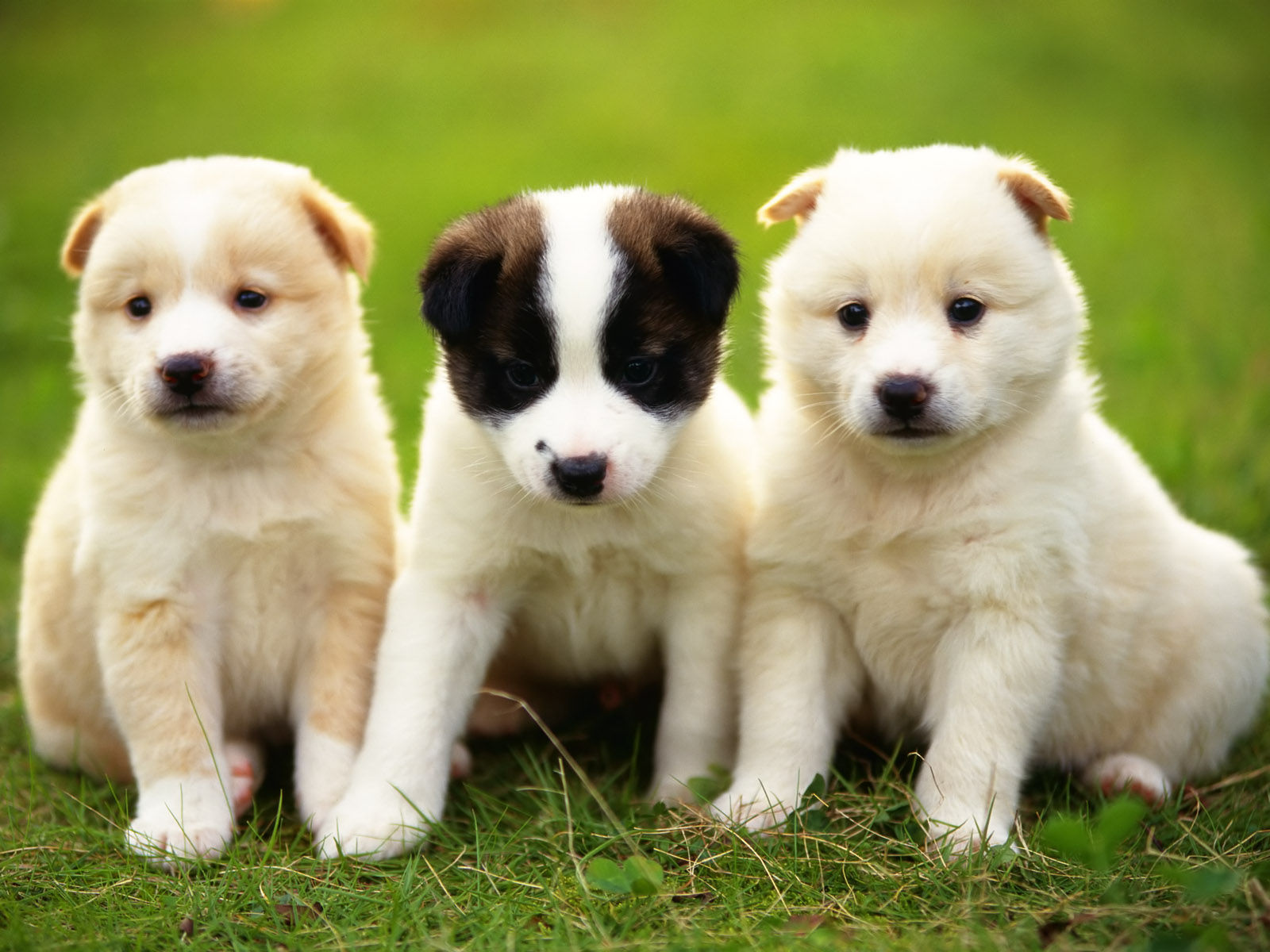 小奶狗福音|盘点六款国货幼犬粮