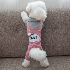 Net Red Teddy dog �...