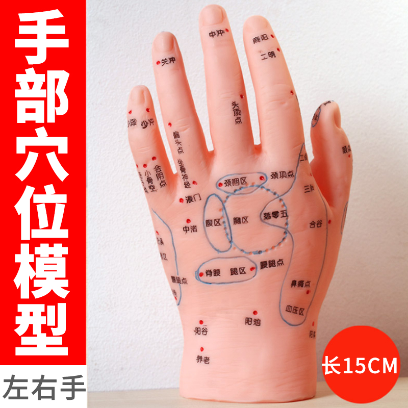 Pair Of Hand Acupoint Models