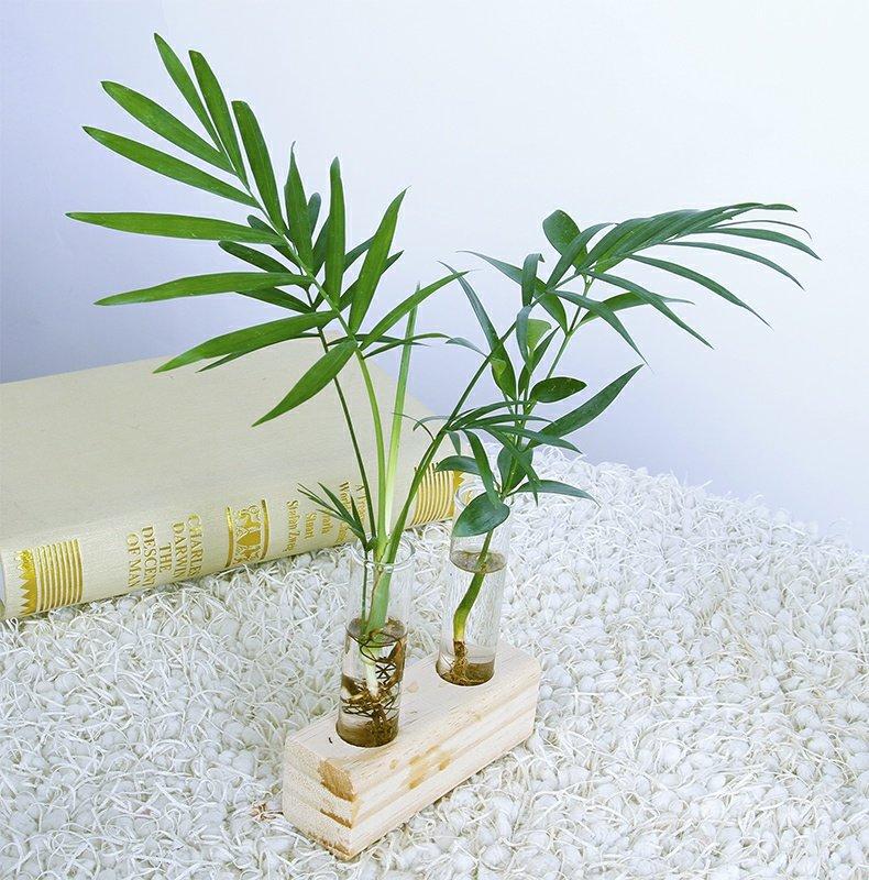 包邮绿萝竹柏罗汉松创意水培摆件带植物发货小椰树木艺玻璃瓶摆件商品详情图