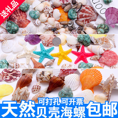 Natural shells, conch, starfish, perforated handmade diy decorations, roll shellfish, hermit crab shell, fish tank, landscaping coral