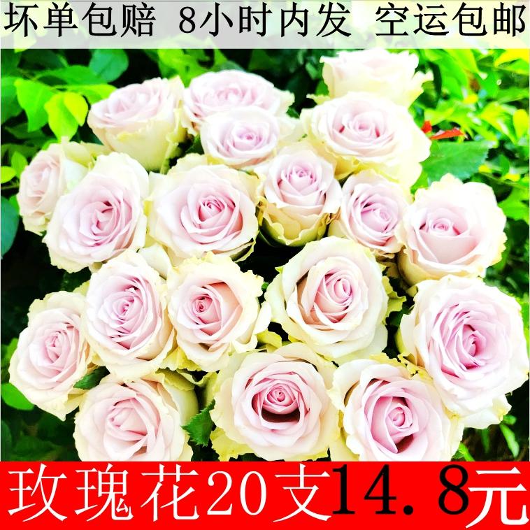 玫瑰花20支鲜花速递(同城)一扎全国包邮云南昆明直发新鲜到家
