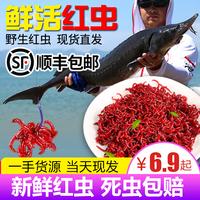 Свежий красный Насекомые очень большие самцы живца кормовая приманка тянуть приманка карась дикая рыболовная приманка рыбалка дождевого червя Тяньцзинь
