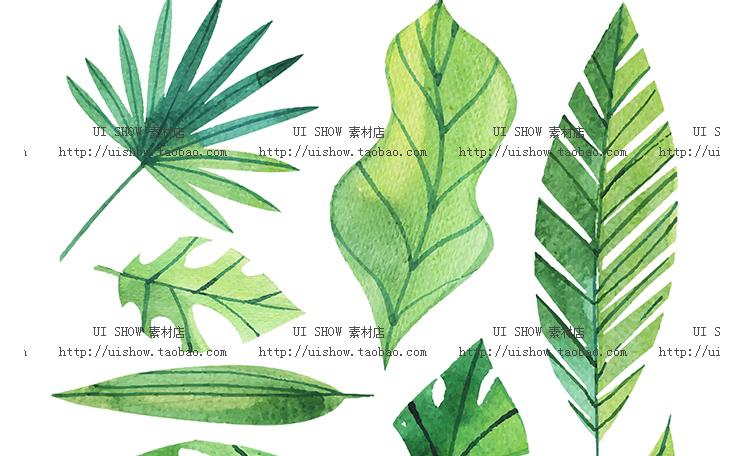 小清新水彩手绘树叶热带棕榈叶植物叶子插画背景海报矢量图片素材插图(29)