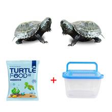 {包活}淡水巴西小乌龟2只+饲料+盒
