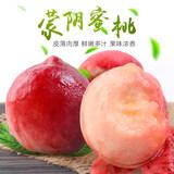 国家地理标志农产品、中国蜜桃之都:5斤 曾子山果园 蒙阴水蜜桃  劵后29.9元包邮
