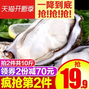 Other seafood,  День море тибет молоко гора сырье устрица свежий живая оболочка устрица мясо свежий что еда море свежий море устрица сын купить 2 модель в целом 10 цзин, единица измерения веса, цена 806 руб