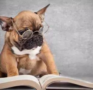 狗子有时候发抖,你在意过吗?