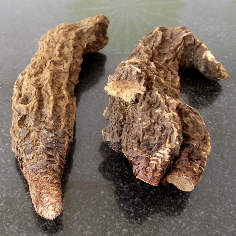 Ганьсу дикий Cynomorium, замачивающий вино лекарственные травы, не являются старыми наркотиками без карнитина пустынного женьшеня Jinsuoyang 2 корня 1 кг