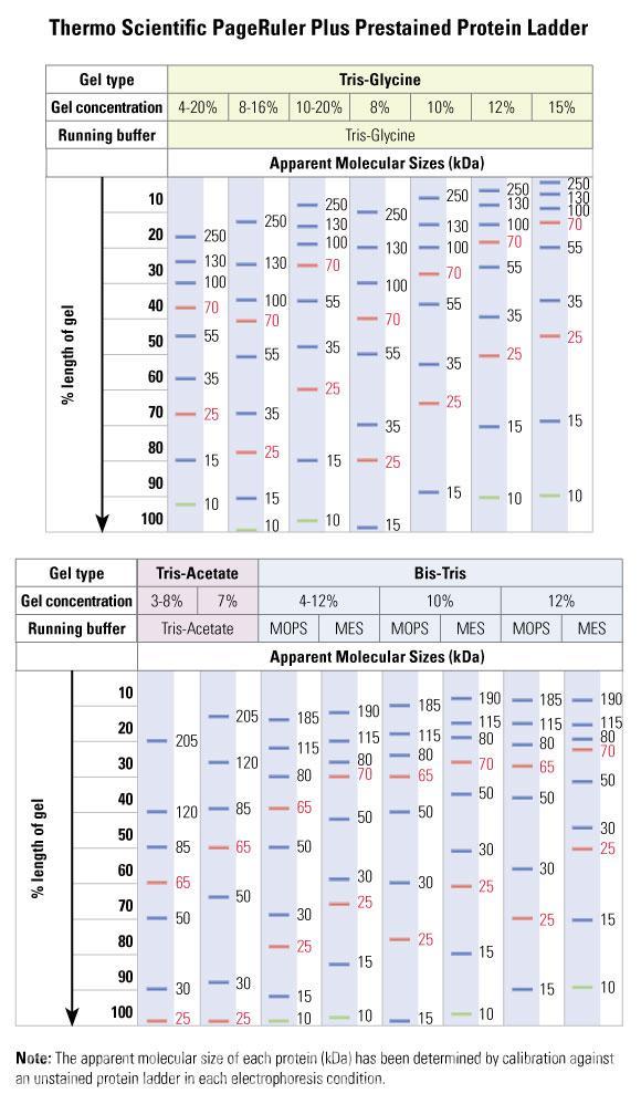 fermentas蛋白_Fermentas预染蛋白Marker 10-250KD(26619/SM1811) 250ul - 阿里巴巴