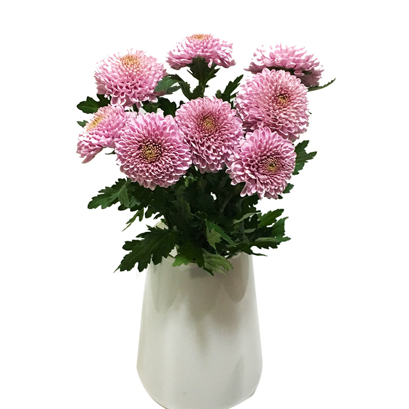 Usd 1636 Yunnan Kunming Flower Delivery Multicolor Ping Pong