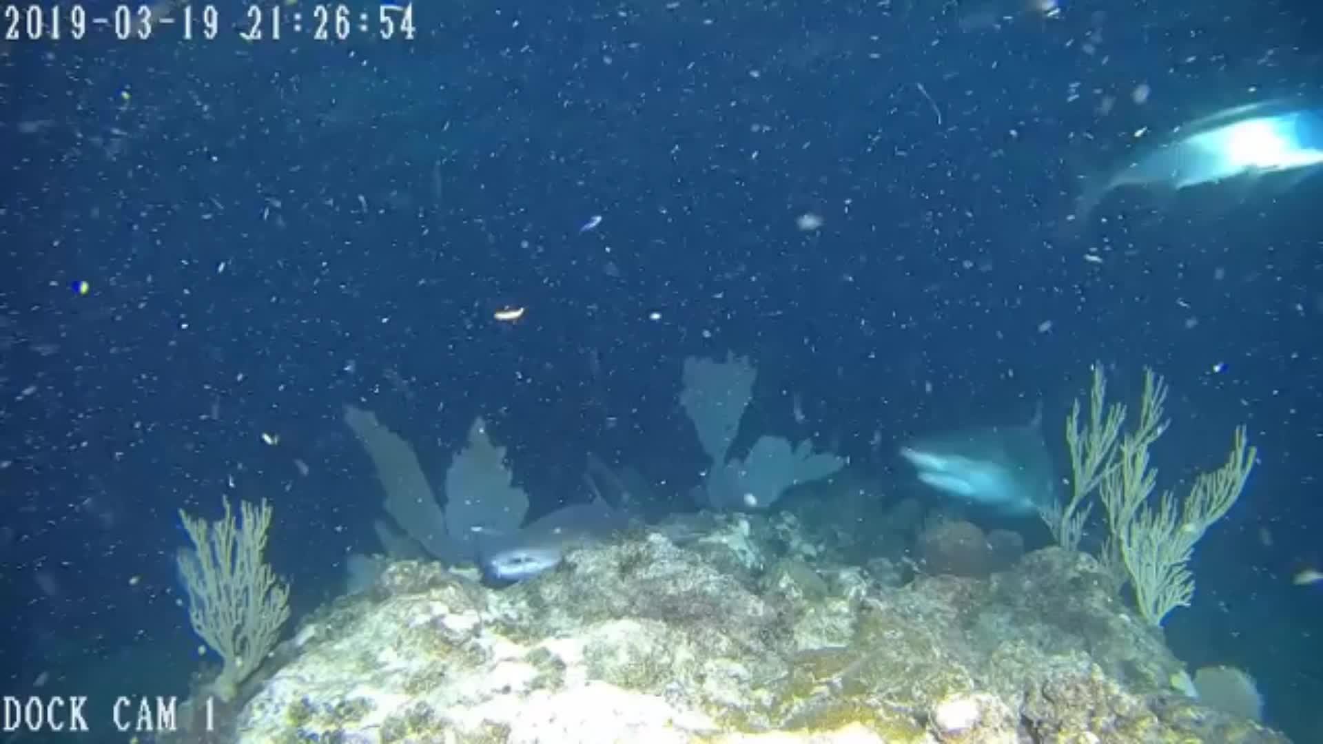 IP68 กันน้ำการตรวจสอบการตรวจสอบ professional fish finder วิดีโอกล้องวงจรปิด ip กล้องตกปลาใต้น้ำ