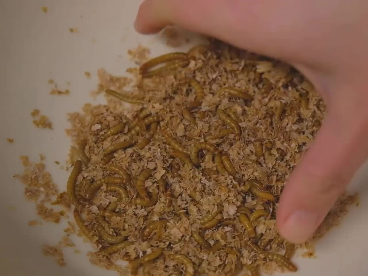 Canned mealworms for Pet Birds Food Amphibians Aquatic Feeder and Fishing Bait Dried Mealworms