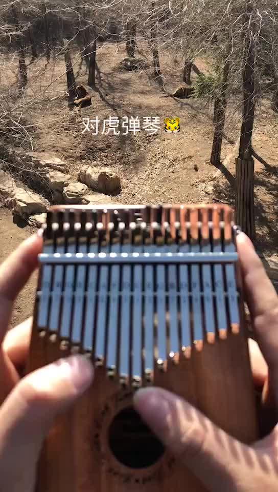 Phi ngón đàn piano 17 key gỗ gụ kalimba để bán