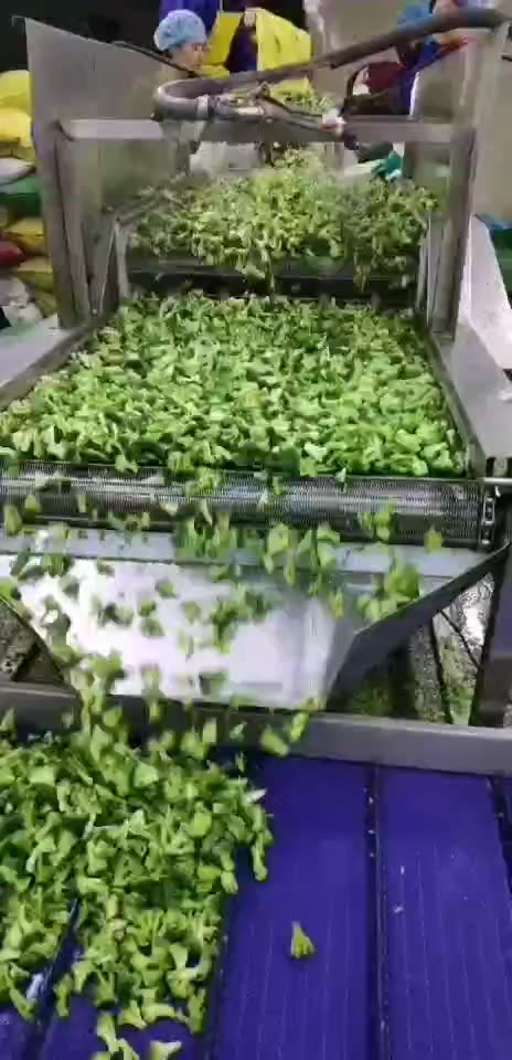 New Crop Quality Assurance IQF Vegetables Frozen Broccoli