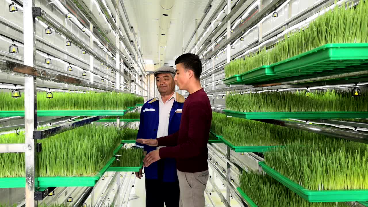 Solar&Wind Powered Farm Hydroponic Fodder System built in 40HQ Freezer shipping container