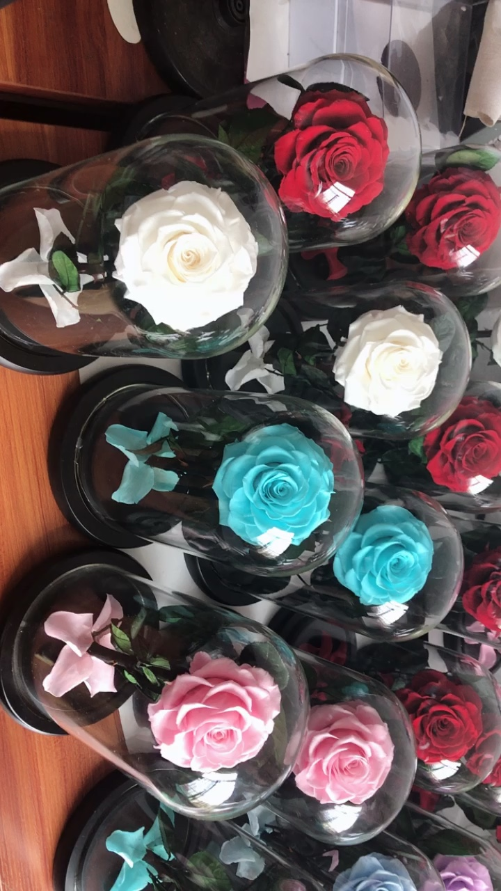 Preserved roses in glass dome as Valentine's Day Saint Valentine's Day gift