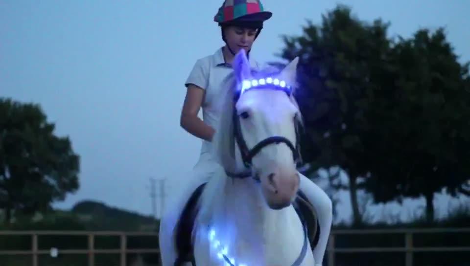 การออกแบบแฟชั่นนำแสงวงและสายรัดขาสำหรับม้า