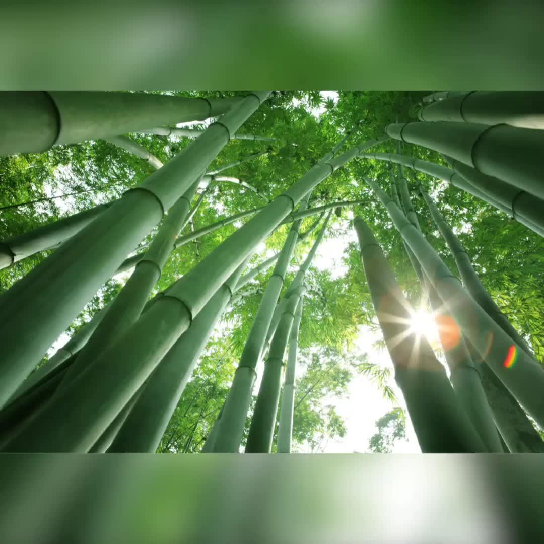 High End Kualitas Mewah Hadiah Promosi Logo Disesuaikan Ramah Lingkungan Alami Kayu Bambu Pulpen Kayu