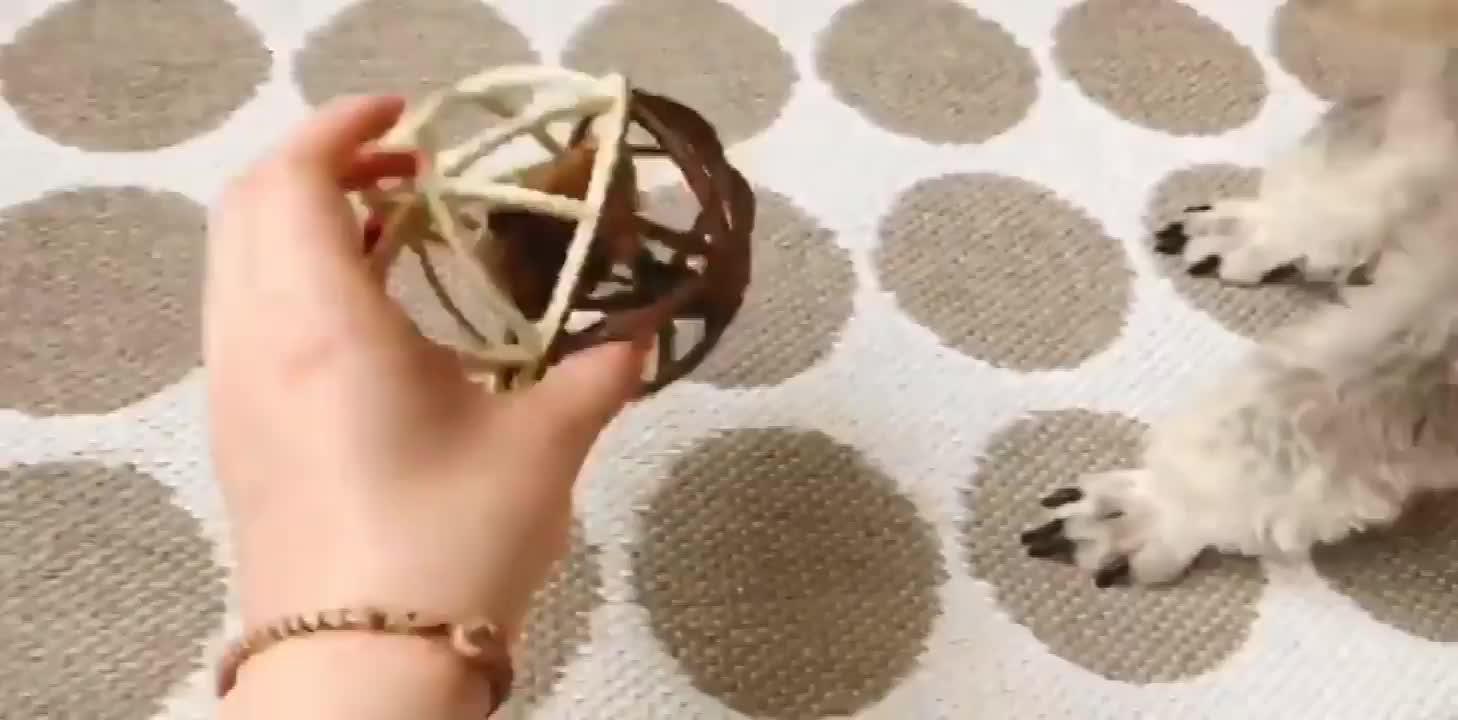 2019 популярные новые продукты, забавная игрушка для домашних животных, кошек, котят, мышей, крыс со звуком в клетке