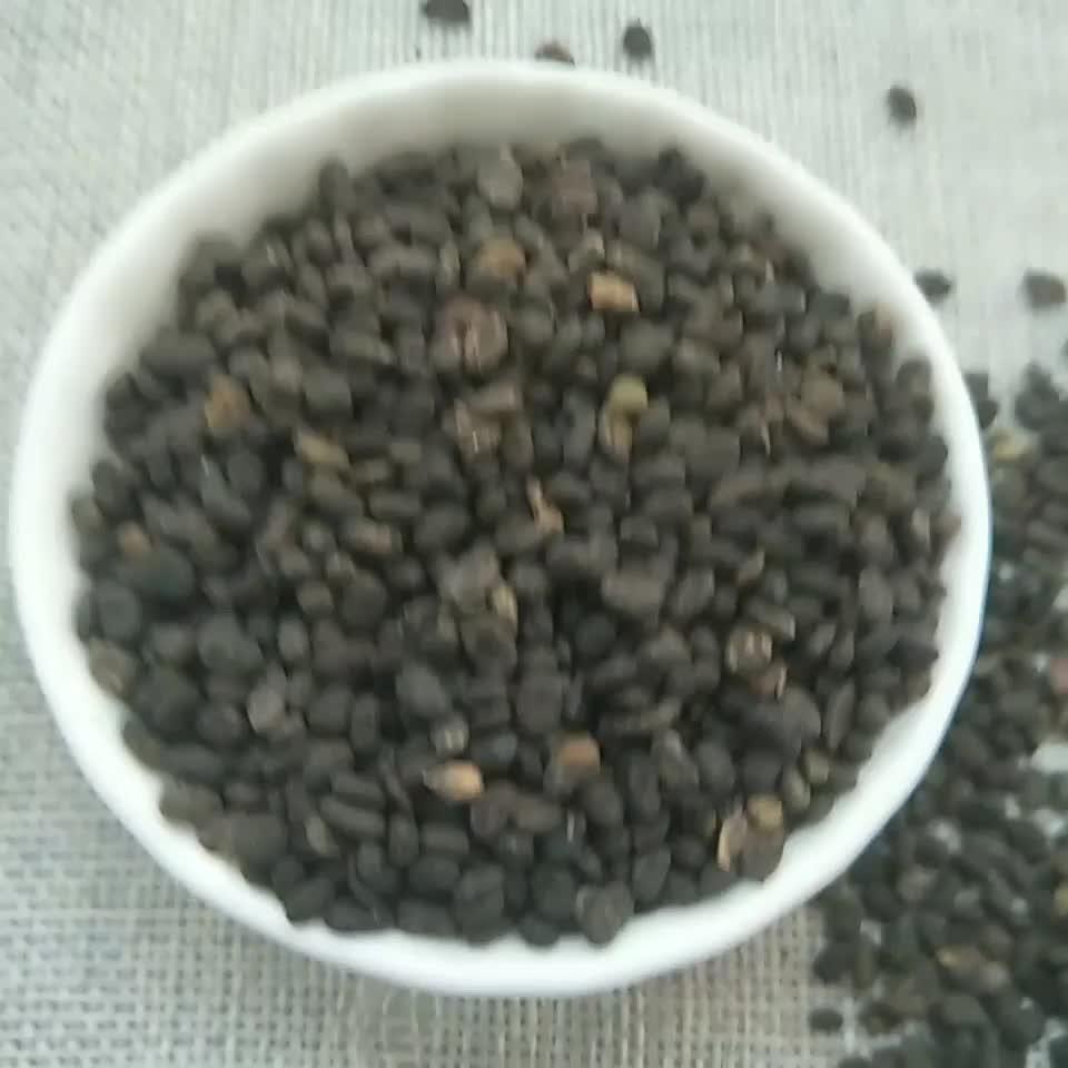 Bu gu zhi 100% Wild herb medicine natural maaytea scurfpea fruit/psoraleae fructus seeds