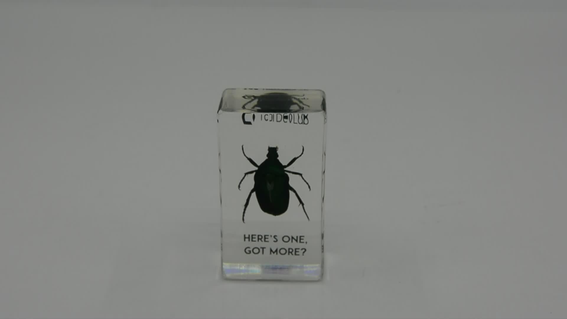 Real Insect Green Chafer Beetle Briefbeschwerer Einschlüsse aus HarzTaxidermy Factory