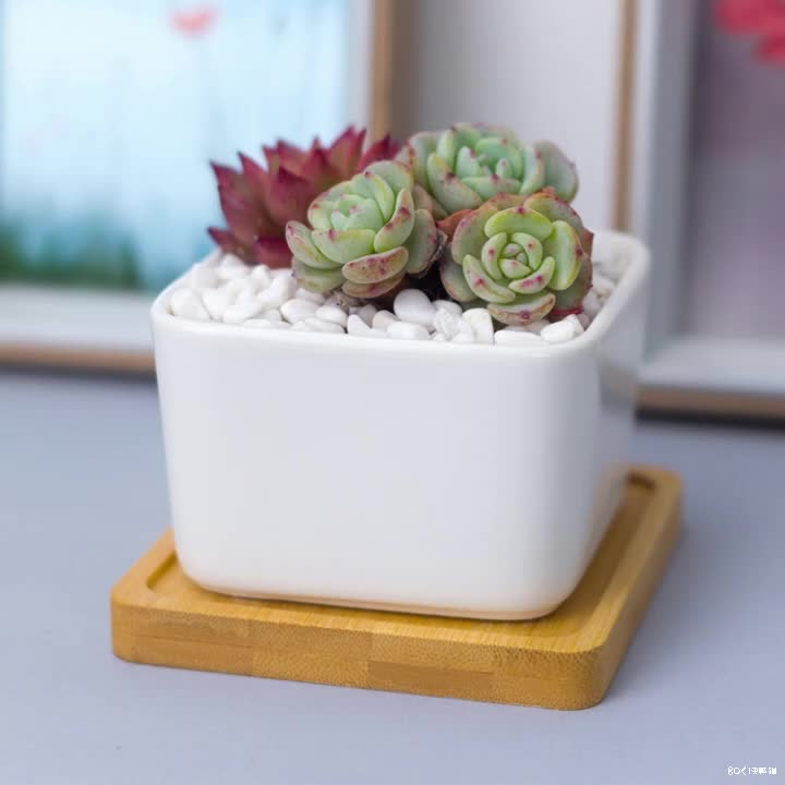 Custom white mini ceramic square succulent planter flower pot