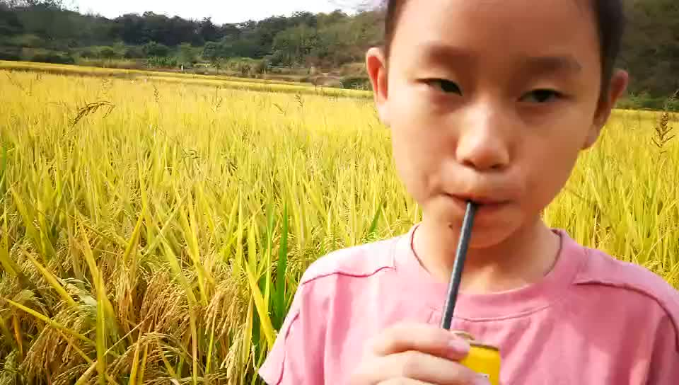100% Recycled Eco Friendly Paper Straws White Paper Drinking Straws Biodegradable Drinking Straw  China made