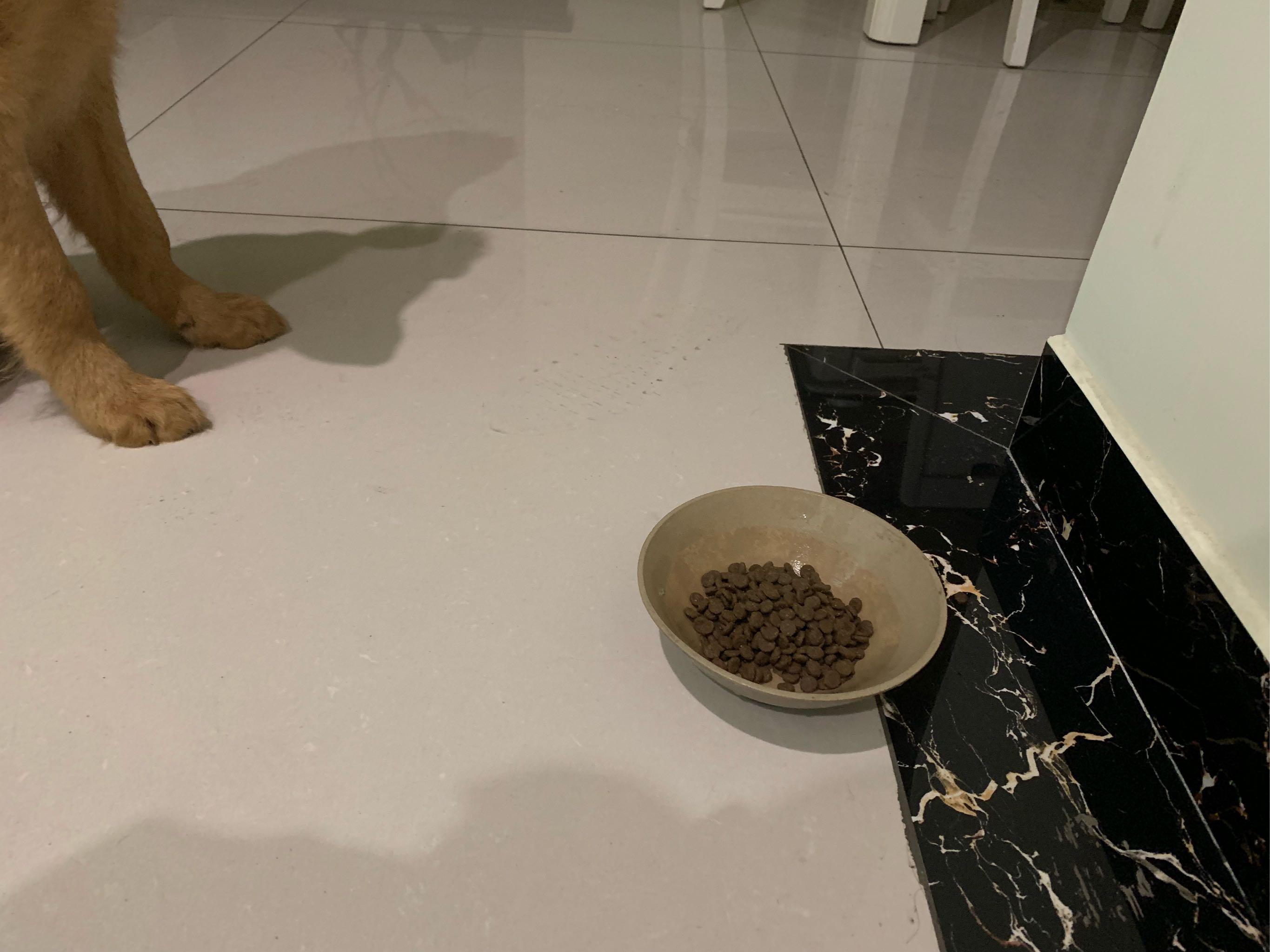 给金毛买的Nourse卫仕狗粮,狗狗非常喜欢吃