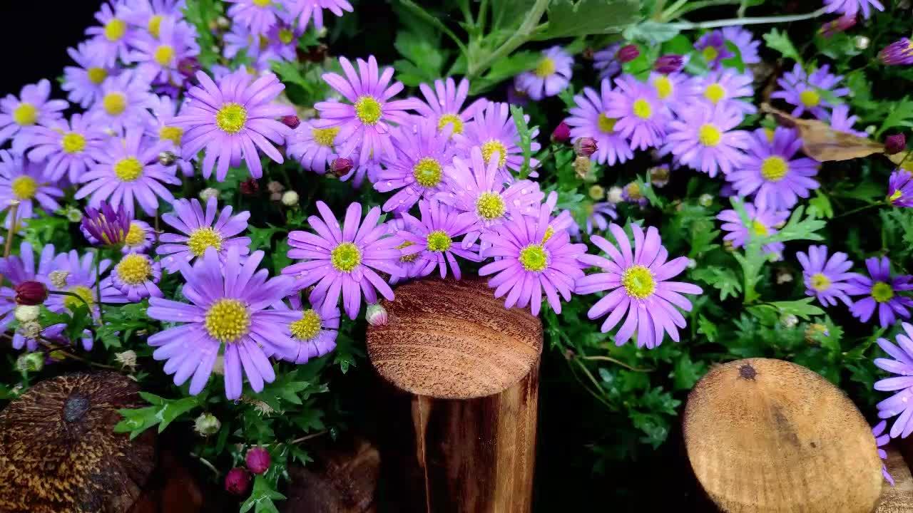 Decorazione Vasi Da Giardino : Soggiorno decorativi da parete commercio allingrosso outdoor vasi