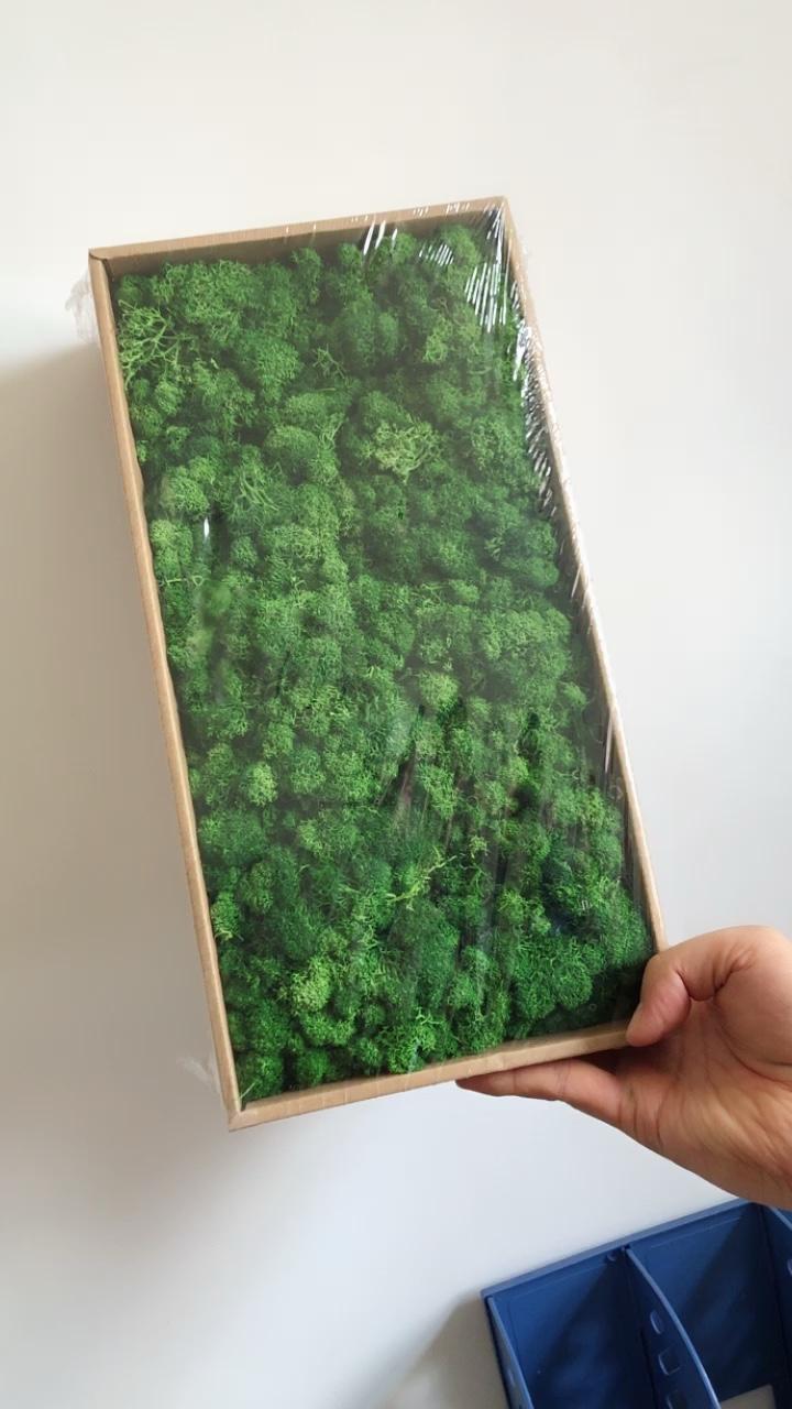 Goede kwaliteit moss gestabiliseerd moss voor groene muur decoratie