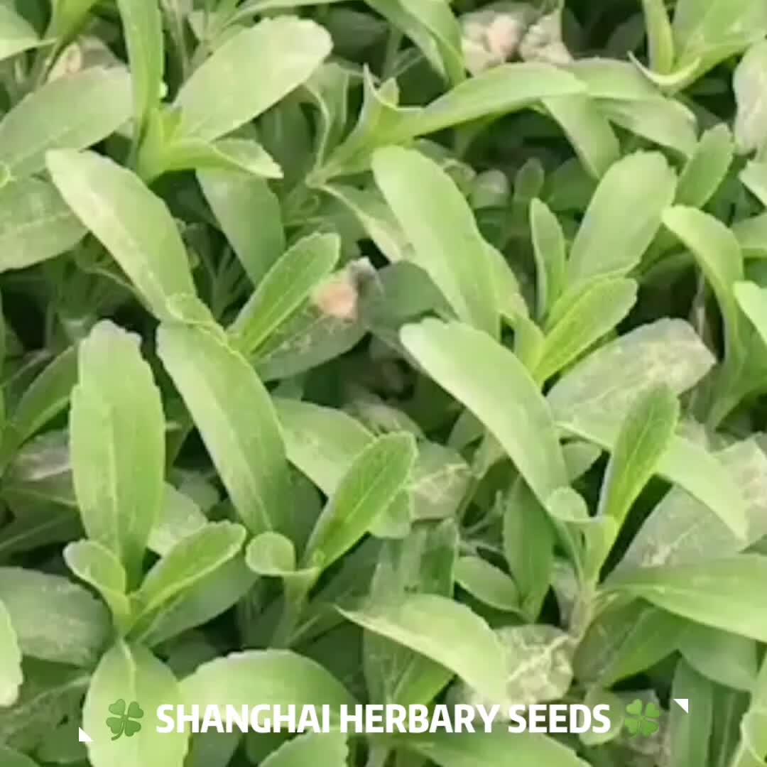 Очень Сладкая Дыня, свежие семена Пепино для выращивания, 2019