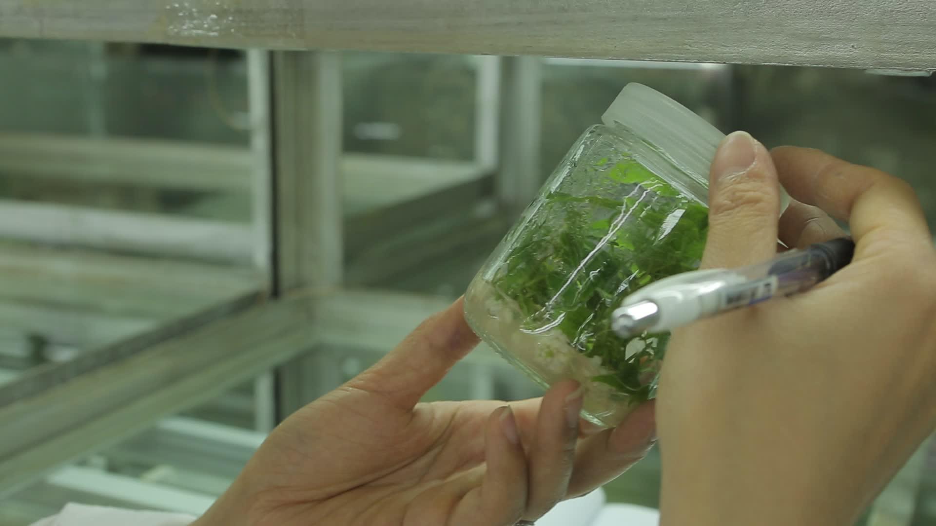 Organic Fruit Extract Hunan Luo Han Guo Beverage Monk Fruit Sweetener