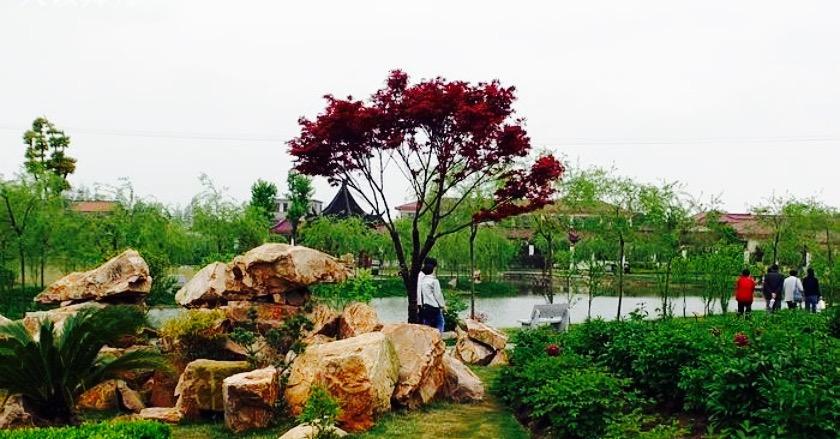 牡丹生态观赏园