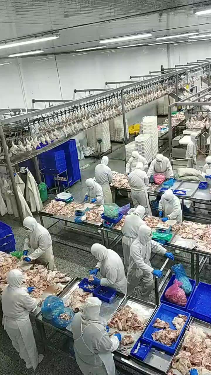 Dependablequality whole frozen broiler halal chicken hearts /gizzards /breat breast bonelessskinless for export