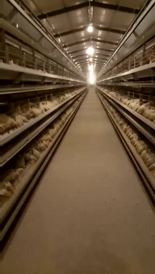 Poultry farming equipment chicken layer cage poultry cage for chicken farm