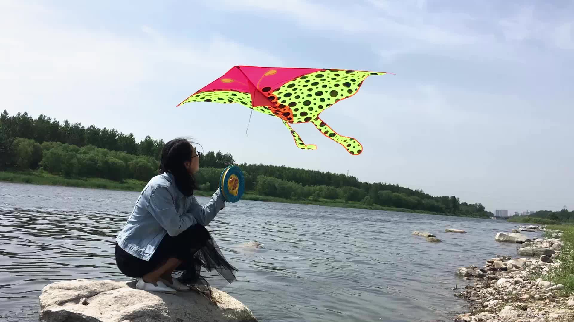 Quality assurance hot sell New type  OUtdoor games fashion north bol plastic fish kite