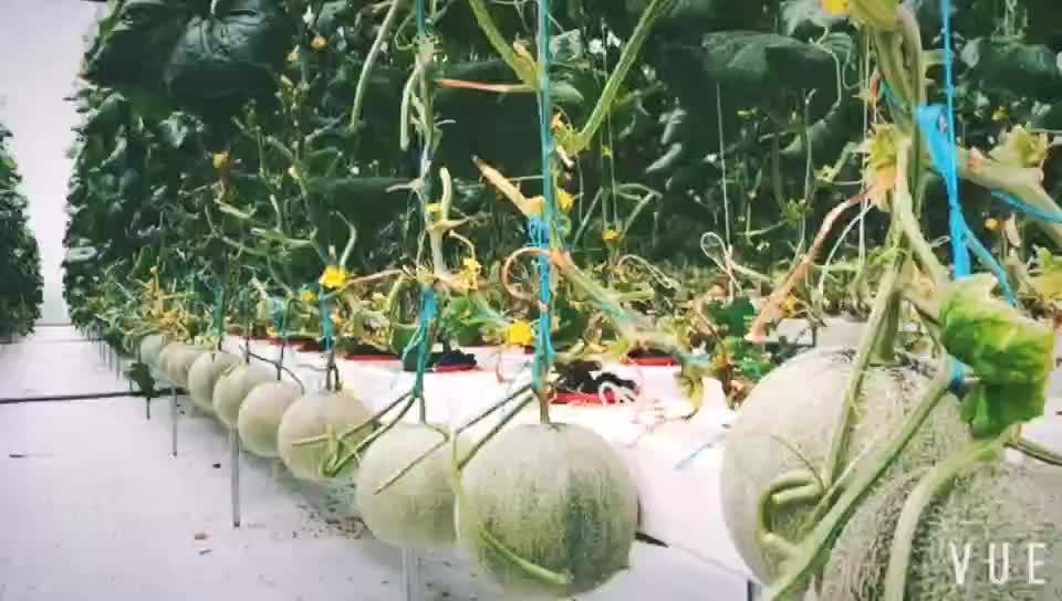 Fmプロフェッショナル現代温室水耕成長システム用tomtao
