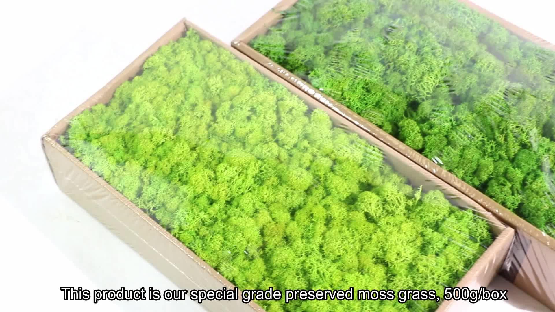 Groothandel grade AA 500g groene verse natuurlijke mos gestabiliseerd bewaard mos voor wanddecoratie