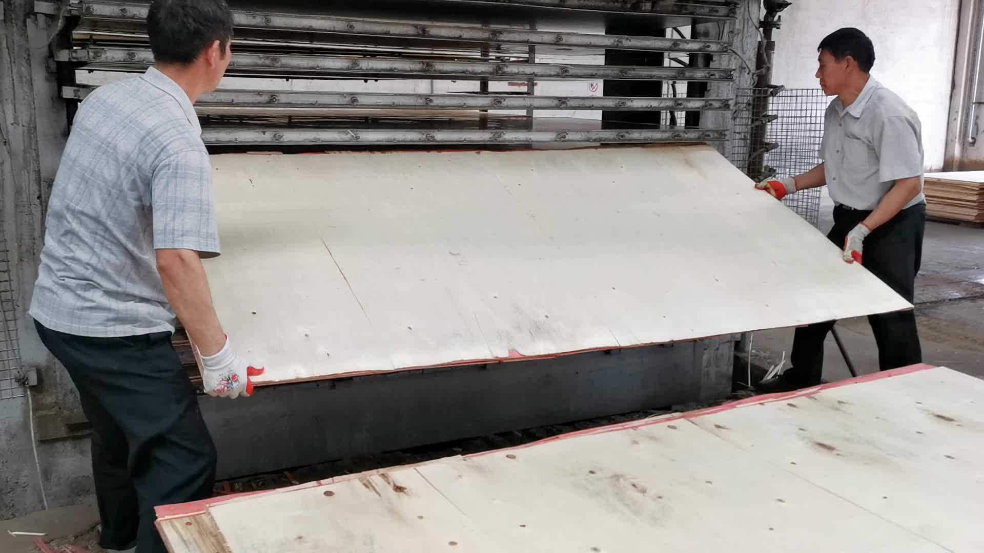 Pine core CDX Plywood used for under the roof