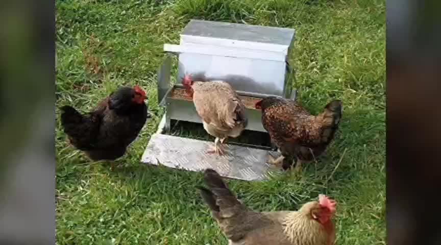Animal Feeders Automatic Chicken Feeder