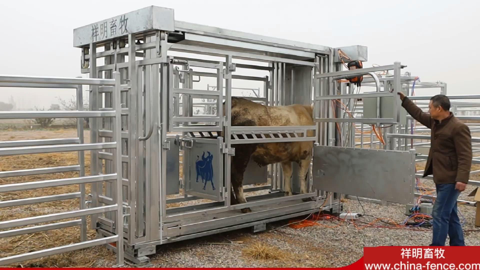 공장 가격 직류 전기를 통한 가축 으crush